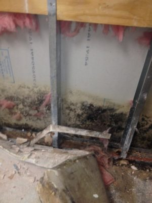 CRS Cleans Mold Safely